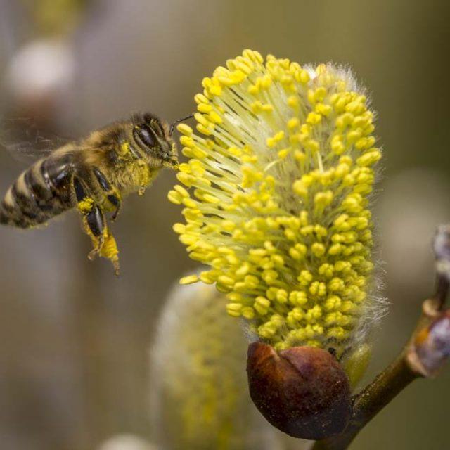 Bijenimpuls Provincie Noord-Brabant